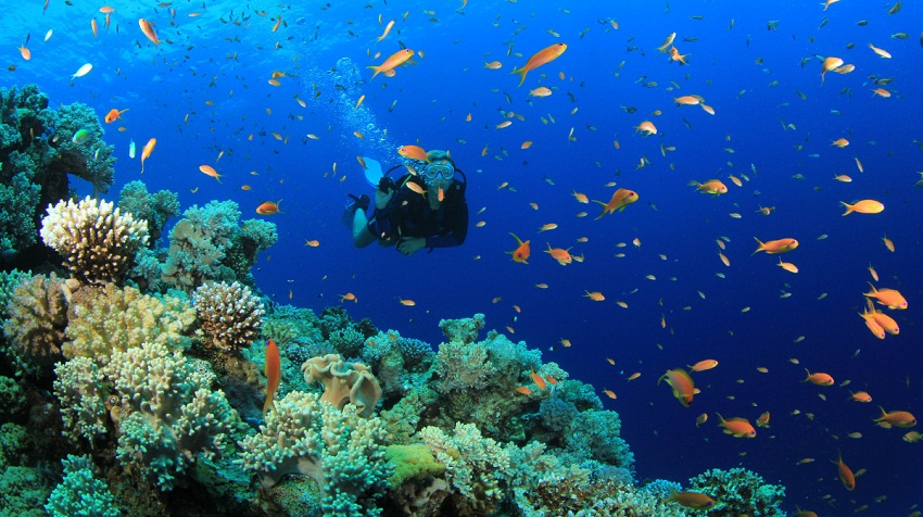 Vietnam Tour > Vietnam Diving Tour > Vietnam Scuba Diving